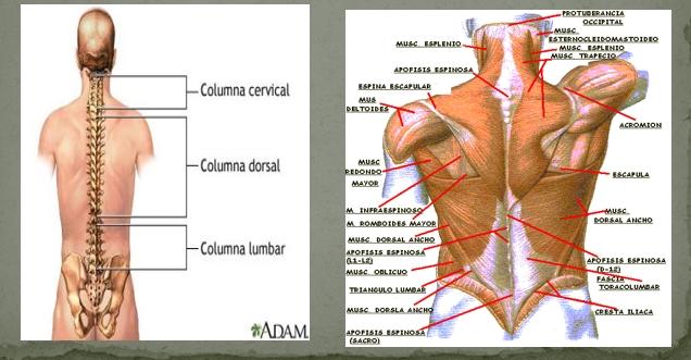 El doctor de los carniceros sobre el dolor en los riñones